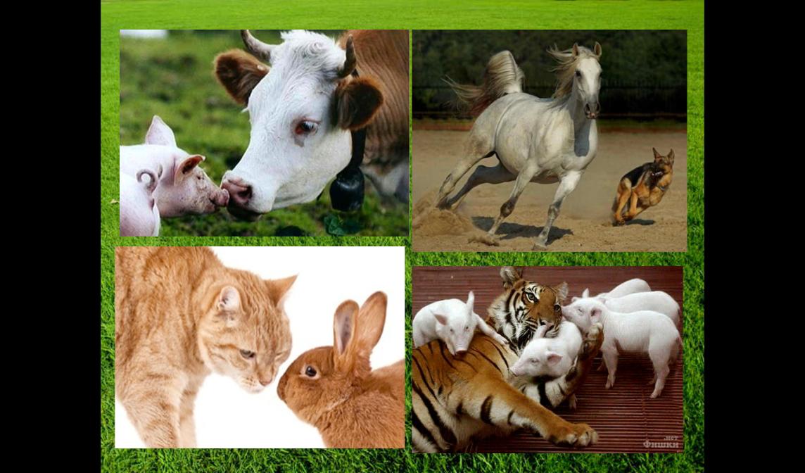 современные фото домашних животных с их детенышами модерн или