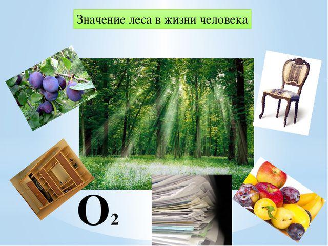 О2 Значение леса в жизни человека