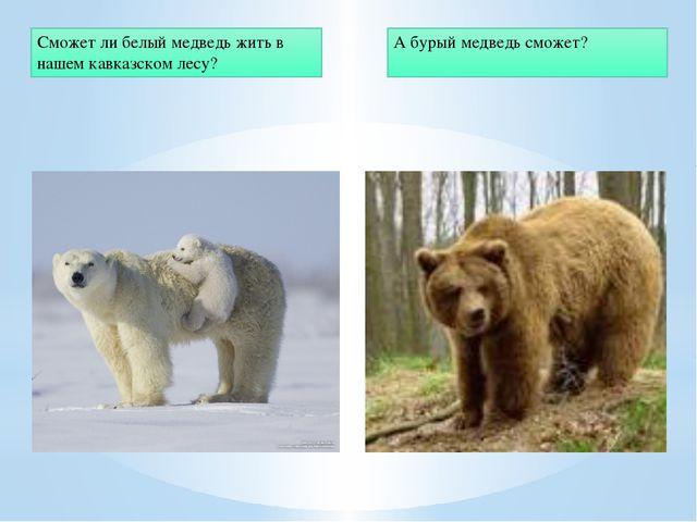 Сможет ли белый медведь жить в нашем кавказском лесу? А бурый медведь сможет?