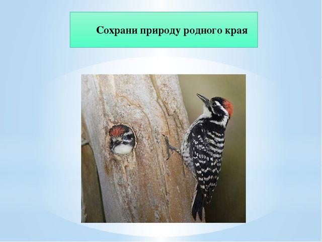 Сохрани природу родного края