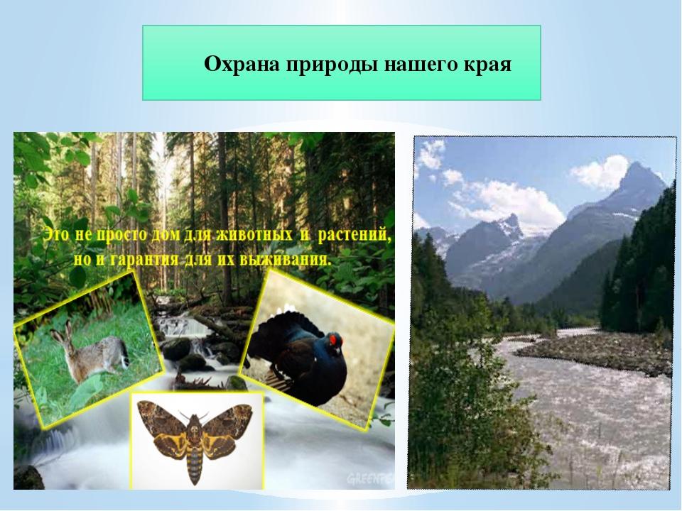 Охрана природы нашего края