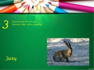 З Комочек пуха, длинное ухо, Прыгает ловко, любит морковку. Заяц