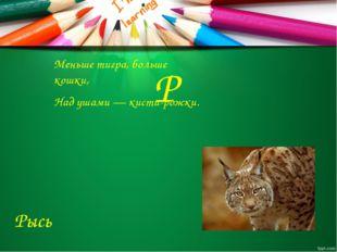 Р Меньше тигра, больше кошки, Над ушами — кисти-рожки. Рысь