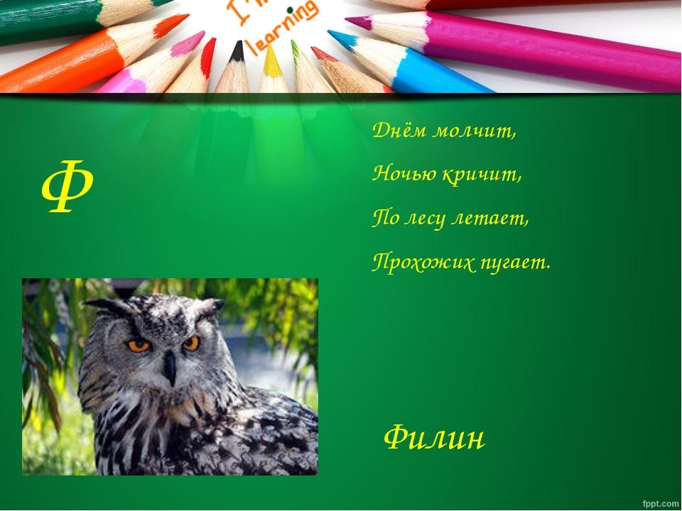Ф Днём молчит, Ночью кричит, По лесу летает, Прохожих пугает. Филин