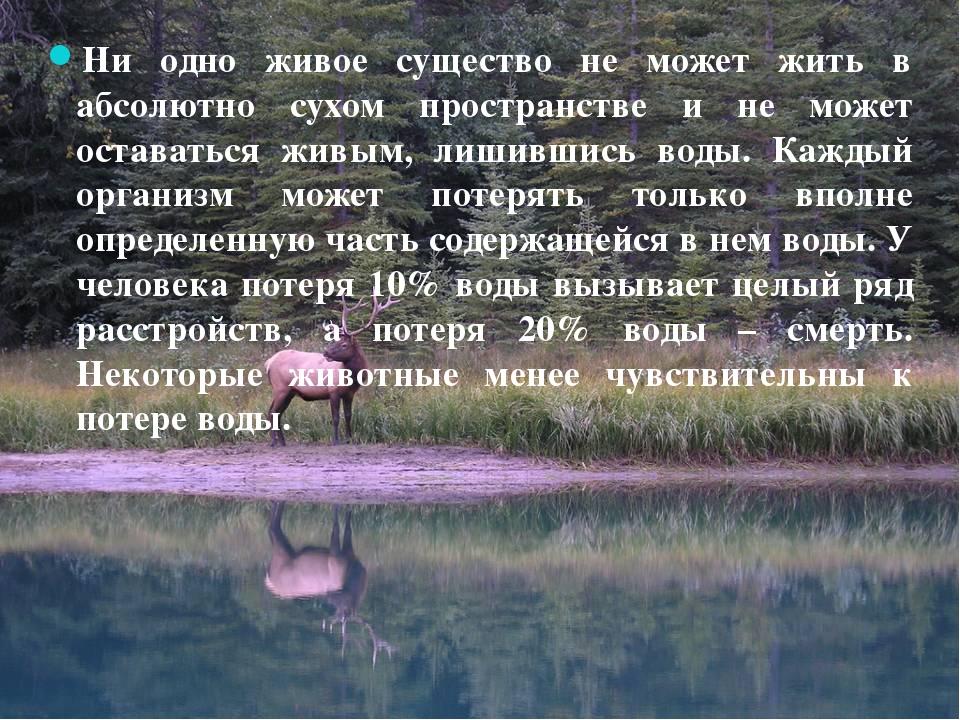 Ни одно живое существо не может жить в абсолютно сухом пространстве и не мож...