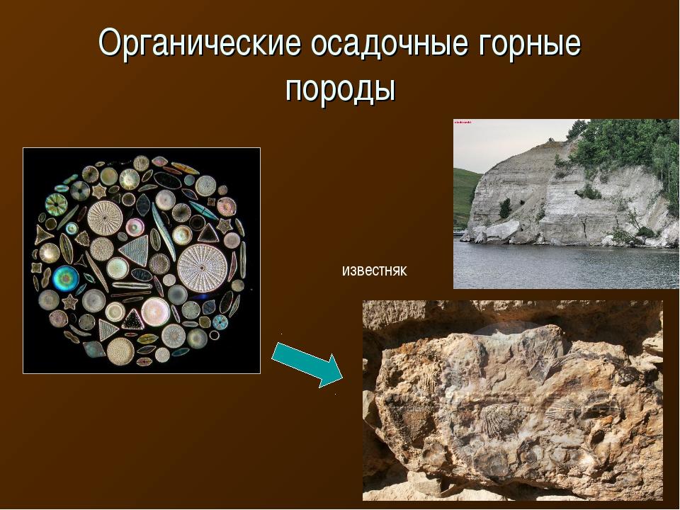 Органические осадочные горные породы