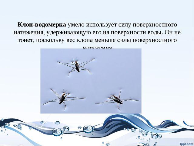 Клоп-водомерка умело использует силу поверхностного натяжения, удерживающую...