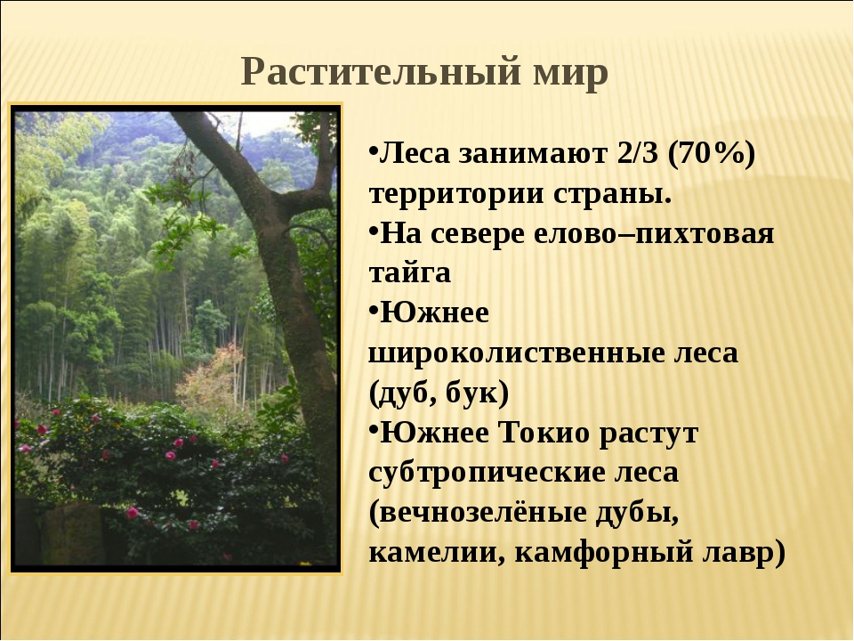 Леса занимают 2/3 (70%) территории страны. На севере елово–пихтовая тайга Южн...