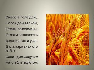 Вырос в поле дом, Полон дом зерном, Стены позолочены, Ставни заколочены. Зол