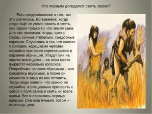 Кто первым догадался сеять зерно? Есть предположение о том, как это случилось