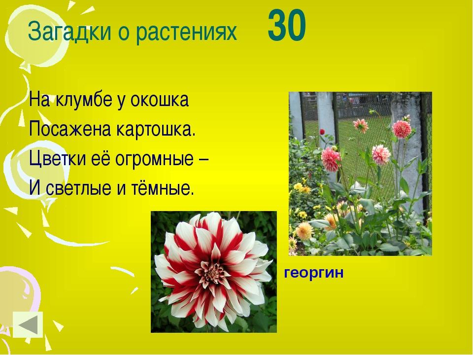 Макро фото растений