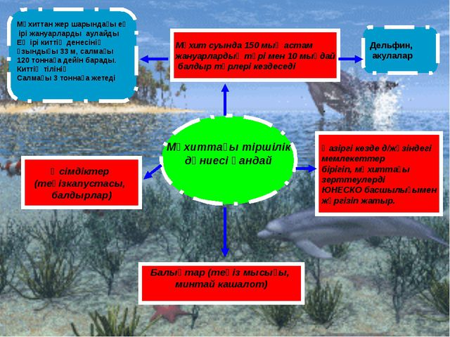 Мұхиттағы тіршілік дүниесі қандай Мұхит суында 150 мың астам жануарлардың түр...