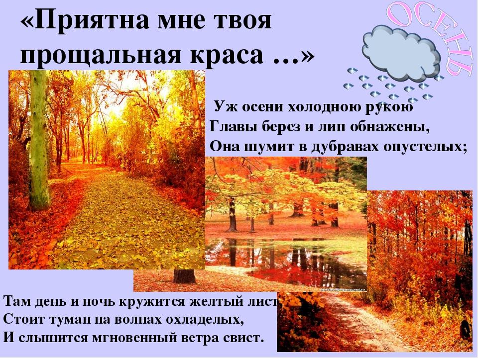 «Приятна мне твоя прощальная краса …» Уж осени холодною рукою Главы берез и л...