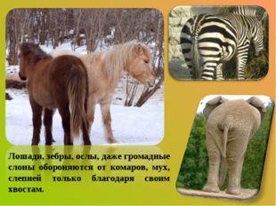 Лошади, зебры, ослы, даже громадные слоны обороняются от комаров, мух, слепне