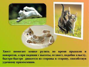Хвост помогает кошке рулить во время прыжков и поворотов, а при падении с выс