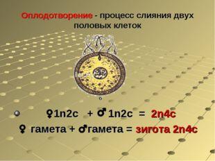 Оплодотворение - процесс слияния двух половых клеток 1n2с + 1n2с = 2n4с гамет