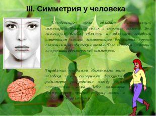 III. Симметрия у человека Человеческое тело обладает билатеральной симметрией