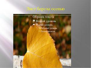Лист березы осенью