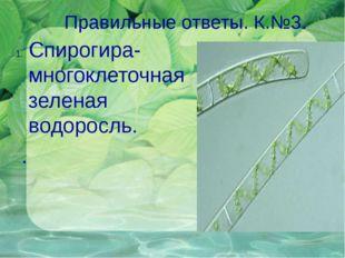 Правильные ответы. К.№3. 1. Спирогира- многоклеточная зеленая водоросль. .