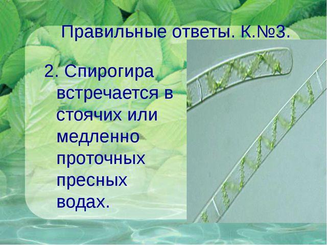 Правильные ответы. К.№3. 2. Спирогира встречается в стоячих или медленно прот...