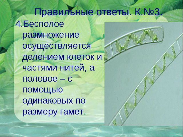 Правильные ответы. К.№3. 4.Бесполое размножение осуществляется делением клето...