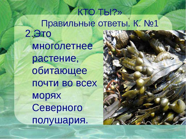 КТО ТЫ?» Правильные ответы. К. №1 2.Это многолетнее растение, обитающее почти...