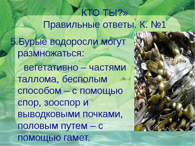 КТО ТЫ?» Правильные ответы. К. №1 5.Бурые водоросли могут размножаться: вегет...