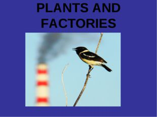 PLANTS AND FACTORIES