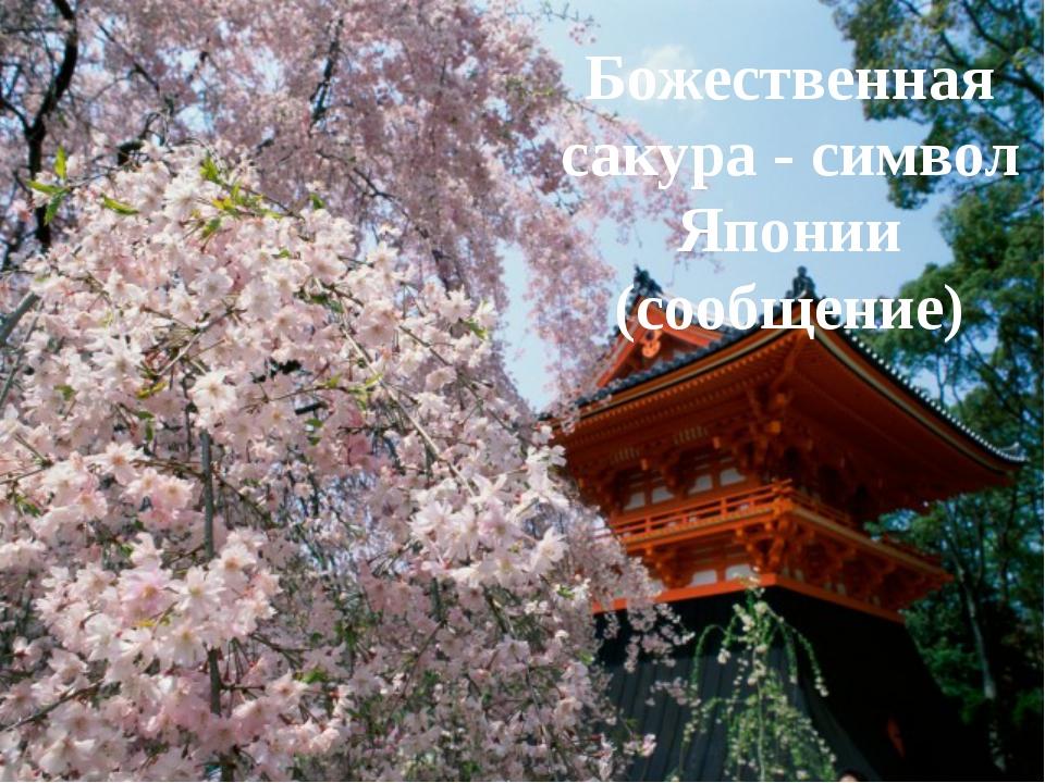 Божественная сакура - символ Японии (сообщение)