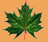 симметрия1