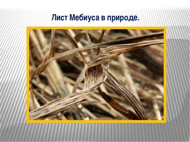 Лист Мебиуса в природе.