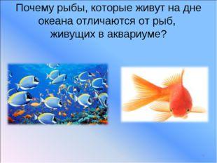 Почему рыбы, которые живут на дне океана отличаются от рыб, живущих в аквариу
