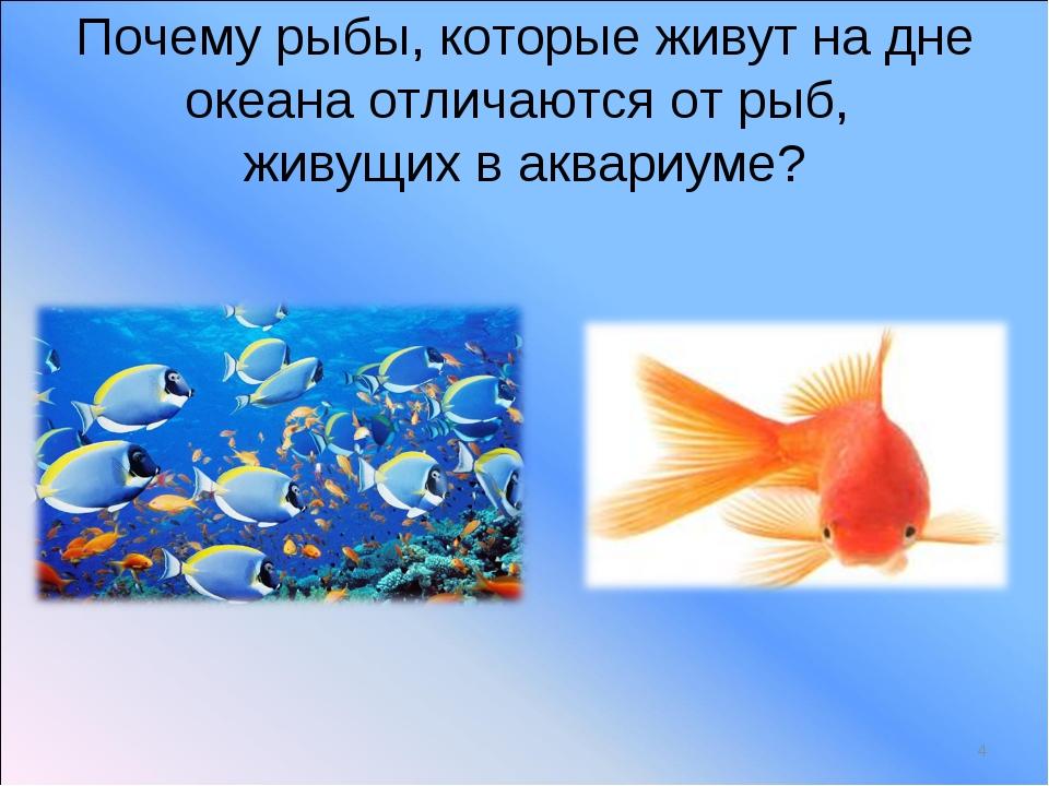 Почему рыбы, которые живут на дне океана отличаются от рыб, живущих в аквариу...