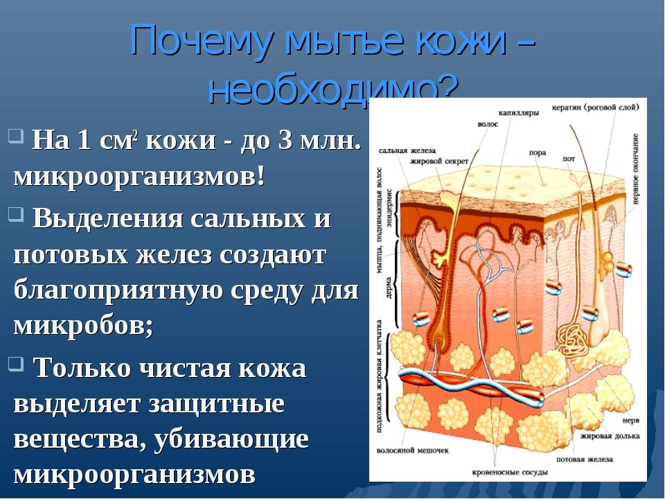 Почему мытье кожи – необходимо? На 1 см2 кожи - до 3 млн. микроорганизмов! Вы...