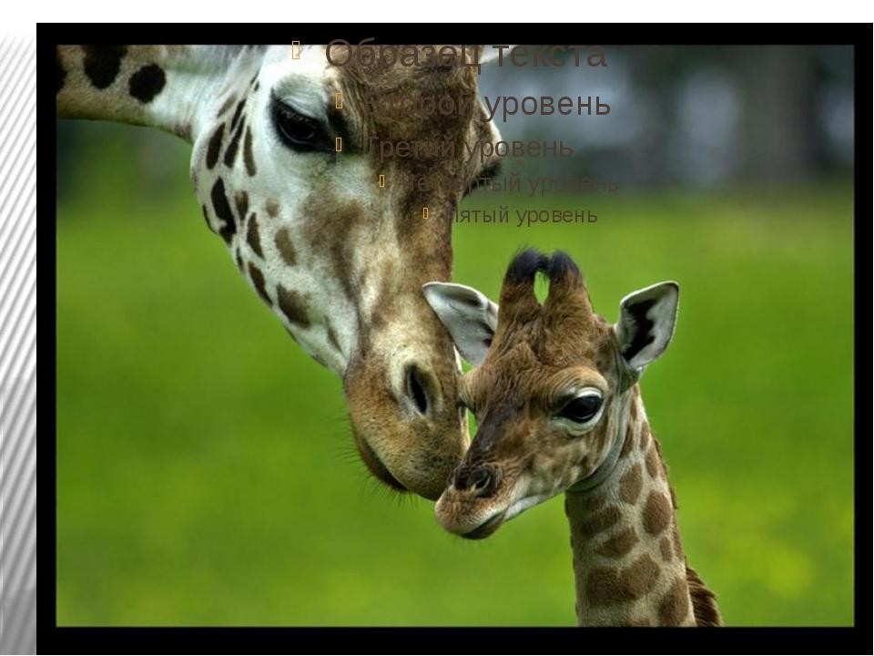 Large Janimals Giraffe  ToysRUs