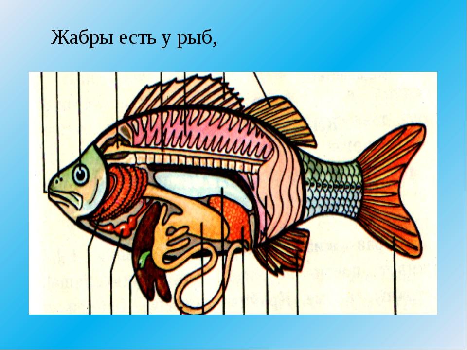 Жабры есть у рыб,