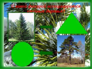 С какой фигурой ассоциируются хвойные деревья?