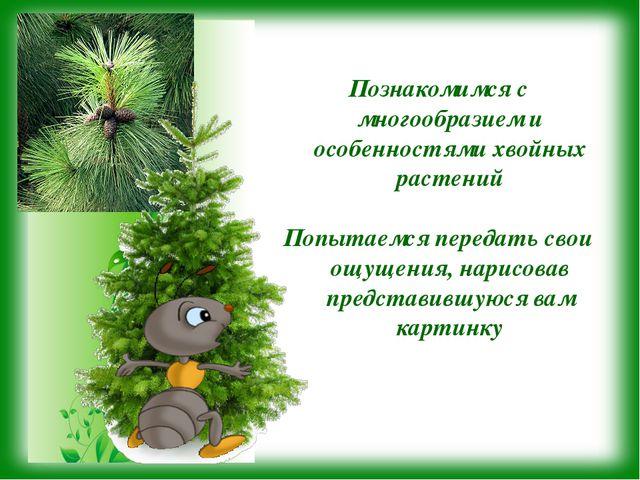 Познакомимся с многообразием и особенностями хвойных растений Попытаемся пере...