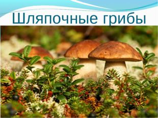 Шляпочные грибы *