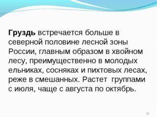* Груздь встречается больше в северной половине лесной зоны России, главным о
