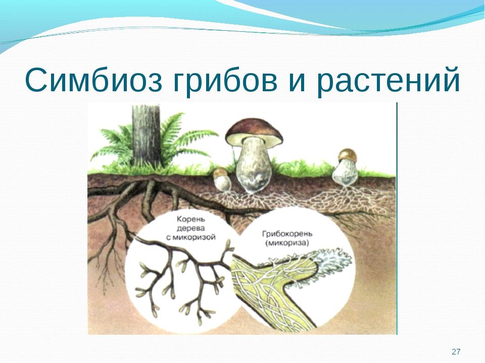 Симбиоз грибов и растений *