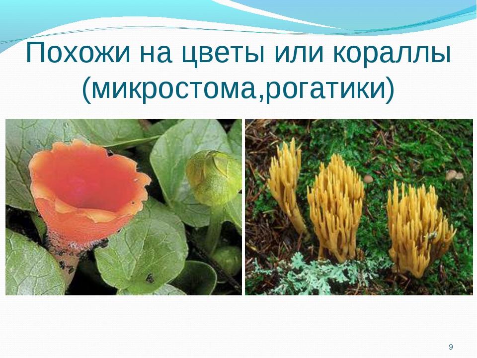 Похожи на цветы или кораллы (микростома,рогатики) *