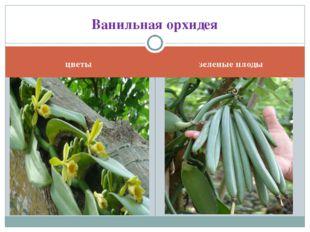 цветы зеленые плоды Ванильная орхидея