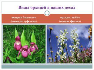 венерин башмачок (женская туфелька) орхидея любка (ночная фиалка) Виды орхиде