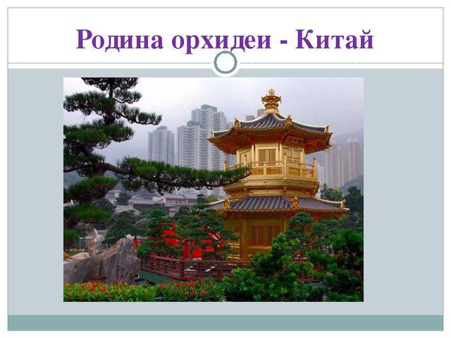Родина орхидеи - Китай