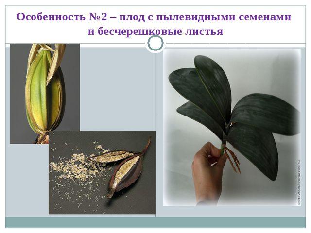 Особенность №2 – плод с пылевидными семенами и бесчерешковые листья