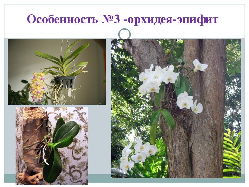 Особенность №3 -орхидея-эпифит