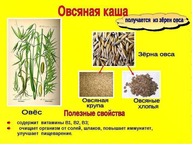содержит витамины B1, В2, В3; очищает организм от солей, шлаков, повышает им...