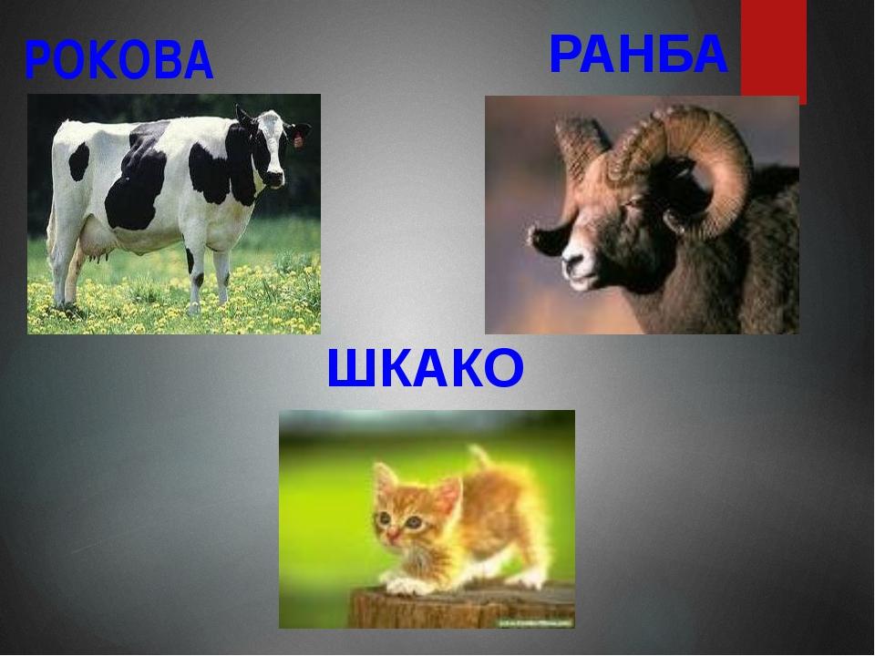 РОКОВА РАНБА ШКАКО