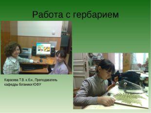 Работа с гербарием Карасева Т.В. к.б.н., Преподаватель кафедры ботаники ЮФУ